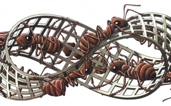 240698-artwork-m-_c-_escher-insect-ants-grid-3d-white_background-mobius_strip-736x459